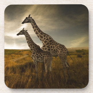 Giraffes and The Landscape Coaster