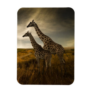 Giraffes and The Landscape Rectangular Photo Magnet
