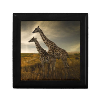 Giraffes and The Landscape Gift Box