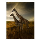 Giraffes and The Landscape Postcard