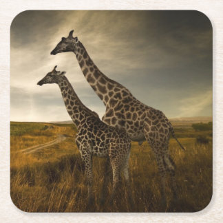 Giraffes and The Landscape Square Paper Coaster