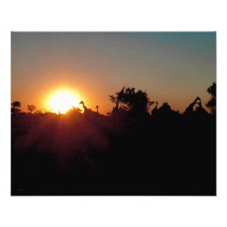 GIRAFFES AT SUNSET PHOTO ENLARGEMENT