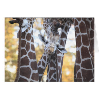Giraffes at Tama Zoo, Tama Zoo, Tokyo Card