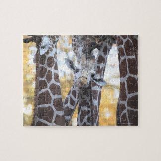 Giraffes at Tama Zoo, Tama Zoo, Tokyo Puzzle