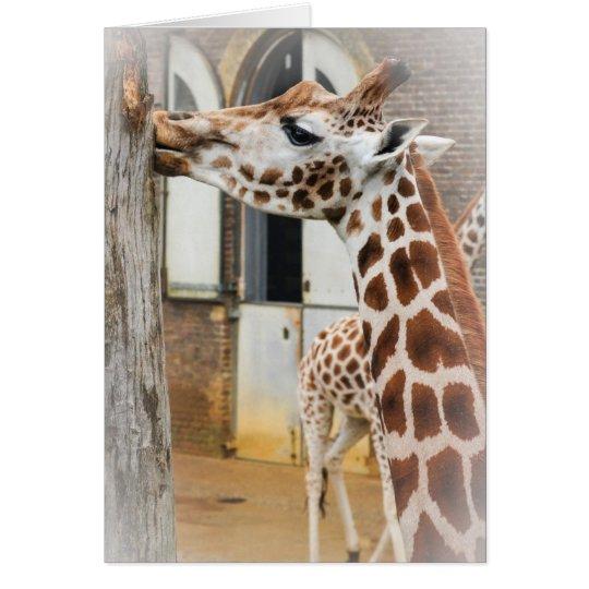 Giraffes Card