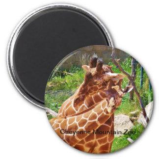 Giraffes giving affection 6 cm round magnet