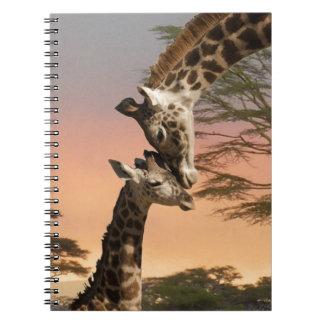 Giraffes Greeting Each Other Notebooks