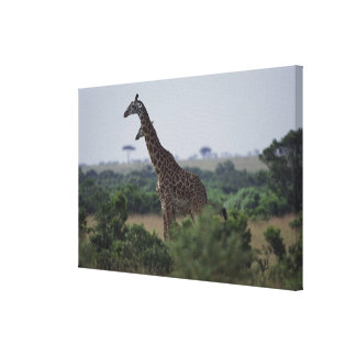 Giraffes in Africa Canvas Print