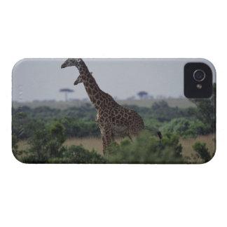 Giraffes in Africa Case-Mate iPhone 4 Case