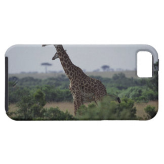 Giraffes in Africa iPhone 5 Covers