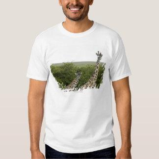 Giraffes in Kenya, Africa 2 Tee Shirt
