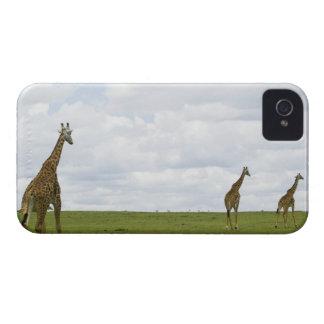 Giraffes in Kenya, Africa iPhone 4 Covers