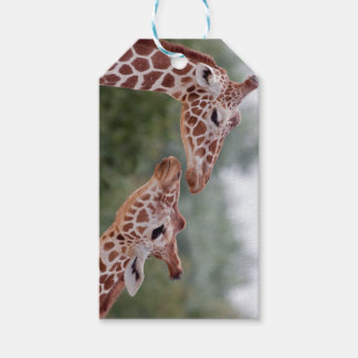 Giraffes in Love Gift Tags
