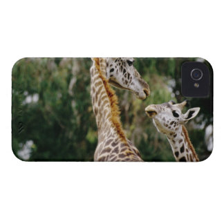 Giraffes iPhone 4 Covers