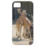 giraffes iPhone 5 covers