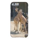 giraffes iPhone 6 case