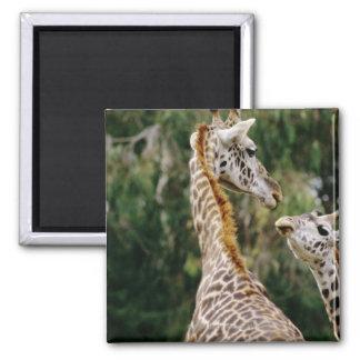Giraffes Magnet