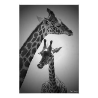 giraffes, mother and child poster