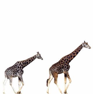 giraffes photo cut outs