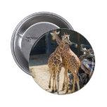 giraffes pinback button