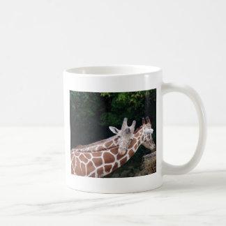 giraffes rubbing necks basic white mug