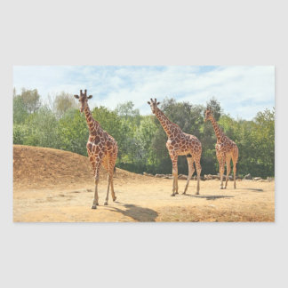 Giraffes Stickers