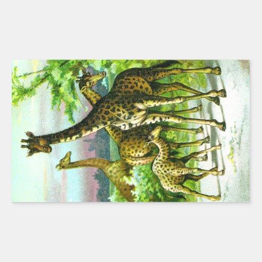 Giraffes with Calf Vintage Illustration Rectangular Sticker