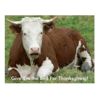 Give 'Em the Bird For Thanksgiving Cow Postcard