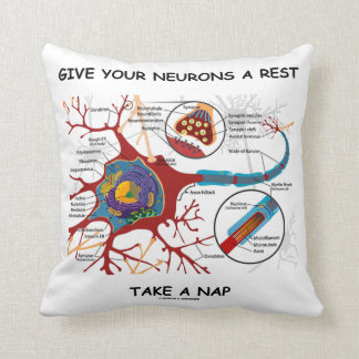 Give Your Neurons A Rest Take A Nap Neuron Synapse Cushion