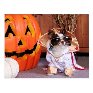 Gizmo - Chihuahua - Thomas Postcard