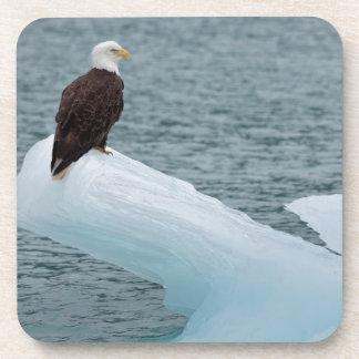 Glacier Bay National Park Bald Eagle Beverage Coaster