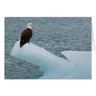 Glacier Bay National Park Bald Eagle Greeting Card