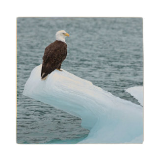 Glacier Bay National Park Bald Eagle Maple Wood Coaster