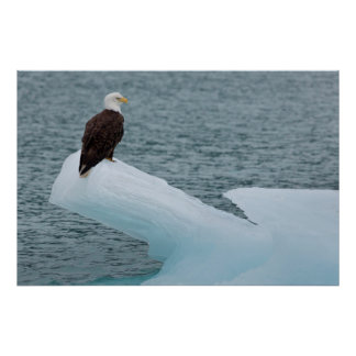 Glacier Bay National Park Bald Eagle Poster
