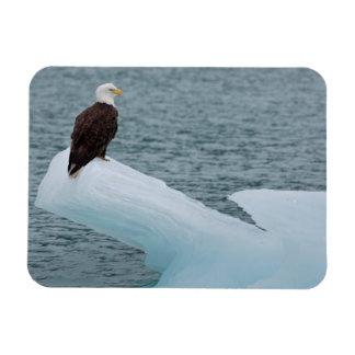 Glacier Bay National Park Bald Eagle Rectangular Photo Magnet
