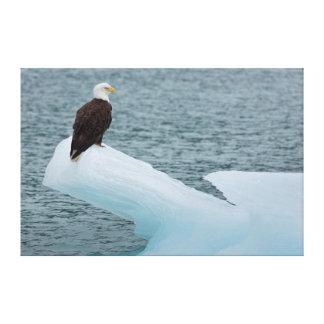 Glacier Bay National Park Bald Eagle Stretched Canvas Prints