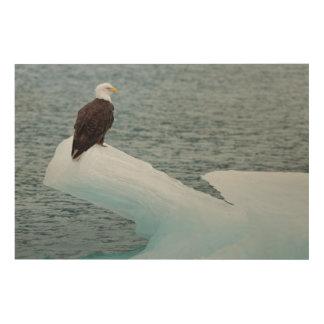 Glacier Bay National Park Bald Eagle Wood Print