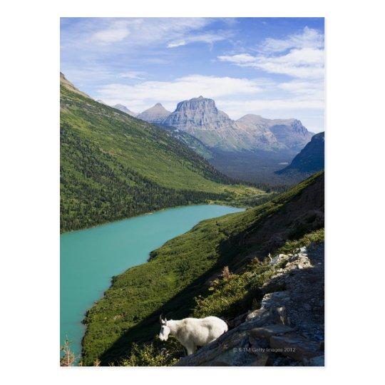 Glacier National Park, Montana Postcard