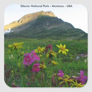 Glacier National Park Wildflowers Square Stickers