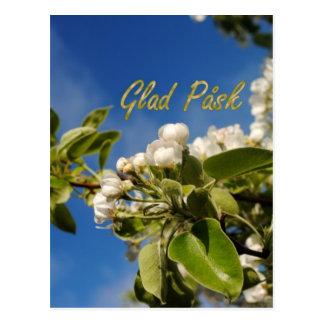 Glad Påsk Postcard