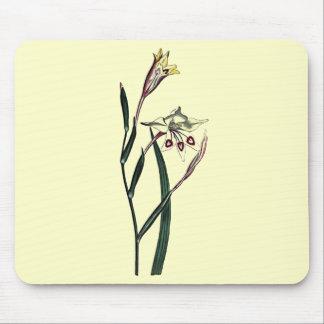 Gladiolus Angustus Mouse Pad