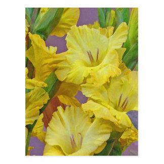 Gladiolus Flowers Postcard