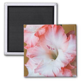 Gladiolus Magnet