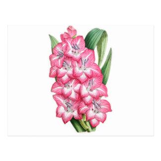 Gladiolus Ulysse Postcard
