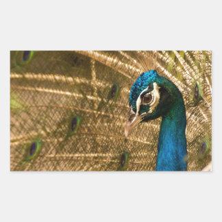 Glamorous Peacock Rectangular Sticker