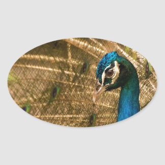 Glamorous Peacock Oval Stickers