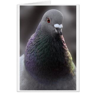Glasgow Pigeon Card