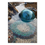 Glass float and anemone greeting card