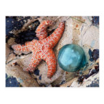 Glass Float and Orange Star Postcard