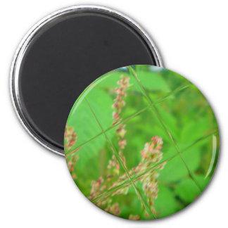 Glass Garden Magnet